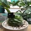 Chuyên lắp đặt camera giám sát ngụy trang tại Hà Nội